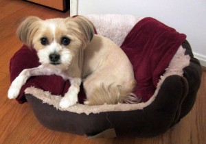 Lulu Loves Her Bed (video)