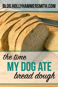 My Dog Ate Bread Dough