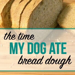 What Happened After My Dog Ate Bread Dough