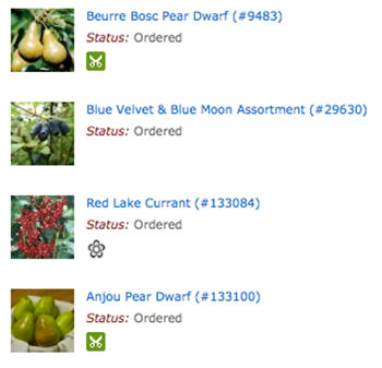 Ordering Fruit Trees Online