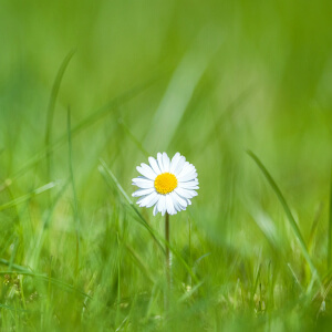 3 Reasons to Practice Organic Lawn Care