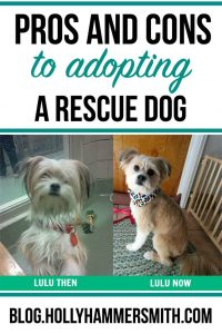 Pros and Cons of Adopting a Rescue Dog