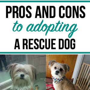 The Pros & Cons of Adopting a Rescue Dog