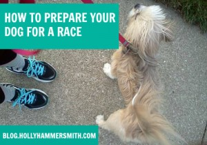 How to Prepare Your Dog for a Race