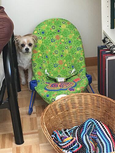 Dog Baby Toys