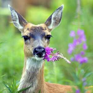 5 Proven Tactics to Get Rid of Deer in the Garden