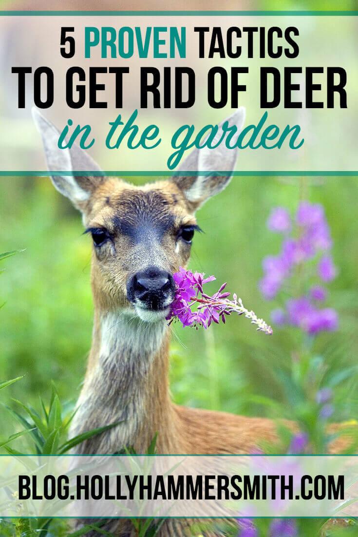 Get Rid of Deer