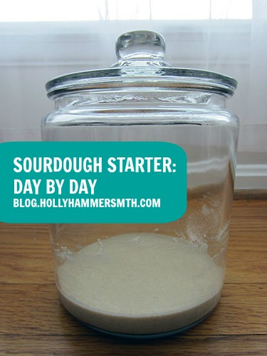 Sourdough Starter Day by Day