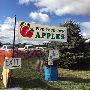 Save Money Apple Picking