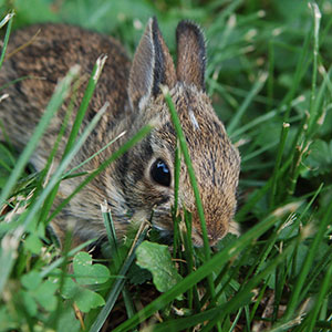 How to Get Rid of Rabbits in the Garden | Welcoming Simplicity