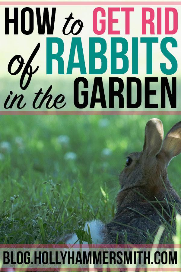 Get Rid of Rabbits