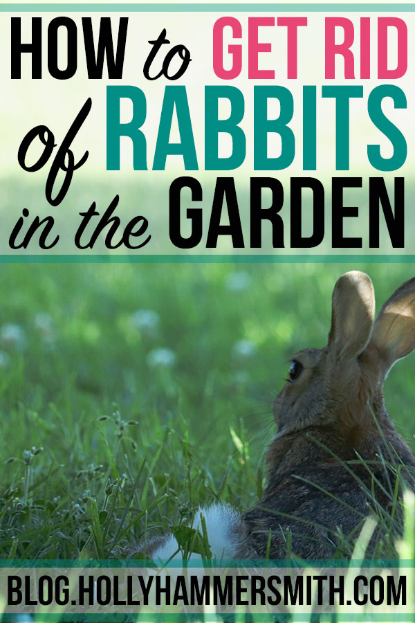 Get Rid of Rabbits